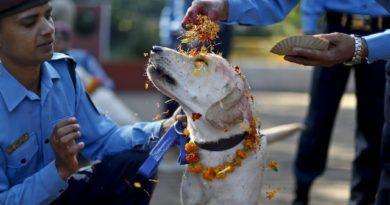 Quando i nostri amici vengono celebrati: in Nepal c'è una festa dove si ringraziano i cani per la loro amicizia e fedeltà