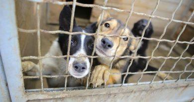 Svolta in Cina, cani e gatti animali da compagnia e non cibo